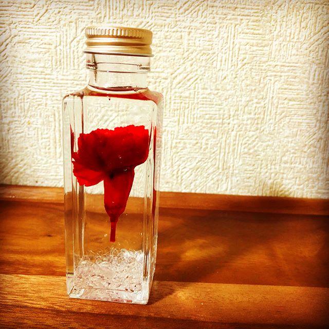 カーネーションハーバリウム。一輪浮いてるように作りました。水晶入り。どの瓶が一番綺麗に見えるかな?#母の日 #母の日ギフト #水晶入りハーバリウム #天然石 #ハーバリウム #カーネーションハーバリウム #カーネーション #ドライフラワー #プリザーブドフラワー #花手鞠